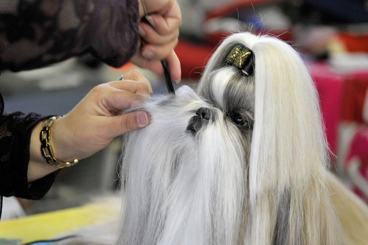 You have a social event where you want to show your beautiful dog to society? We offer you the best services and the best hair styles for dogs. Dog hairdressers will be at your house in less than 5 minutes to offer your dog a real spa and beauty day!!!