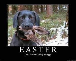 Image detail for -Pictures Of Funny Easter Bunny