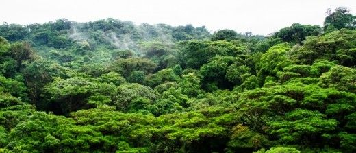 17 of the Largest Rainforests on Earth