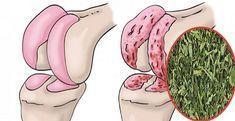 Médicos solo recetan hierbabuena para regenerar el cartílago de cadera y rodillas preparándola de esta forma, es mas efectiva que cualquier tratamiento.