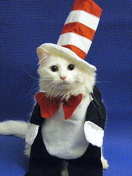 Cat in Hat @ Ryan Martin Jeral LMAO