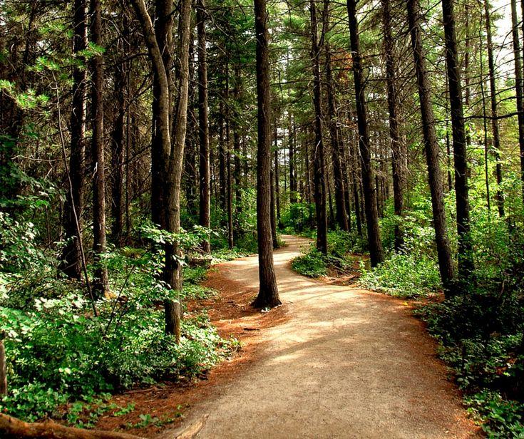 """Il nome Shinrin-yoku lascia già trapelare tutta la saggezza orientale. Questa nuova pratica che giunge dal paese del sol levante non delude le aspettative.  Ci rivela un segreto che a dir la verità a noi non era sfuggito affatto. Anche dal punto di vista giapponese il bosco rilassa.  Ad inventare la pratica dello Shinrin-yoku, letteralmente """"fare il bagno nella foresta"""" sono stati i giapponesi."""