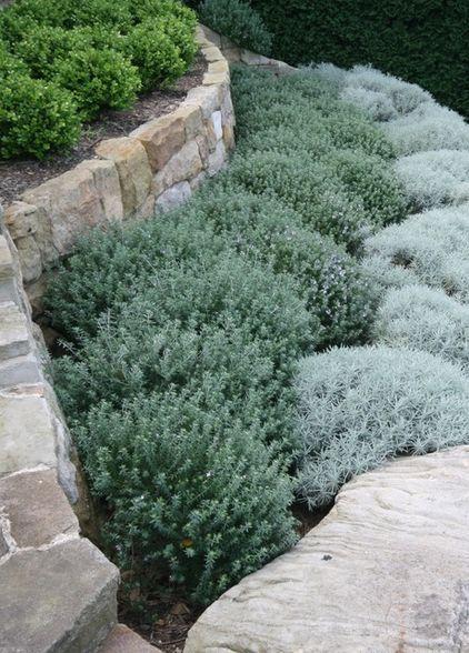 Grey foliage with rock retaining wall by Secret Gardens of Sydney