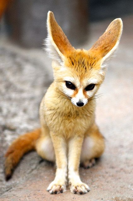 Cute fox #animals