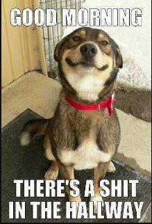 bahahaaha!!!! Damn dog. LMAO