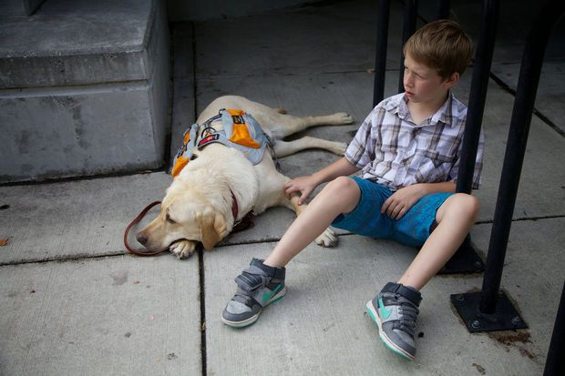 Kermit, a three year old Golden Retriever, has been trained as a diabetic service dog. He has been paired up with Kiernan Sullivan, 9, who is a diabetic. Kiernan had been having diabetic seizures and they thought a diabetic service dog would be a good thing to help Kiernan. Kermit is trained to respond to a high or a low blood sugar in three different ways. ~Benjamin Brink/The Oregonian