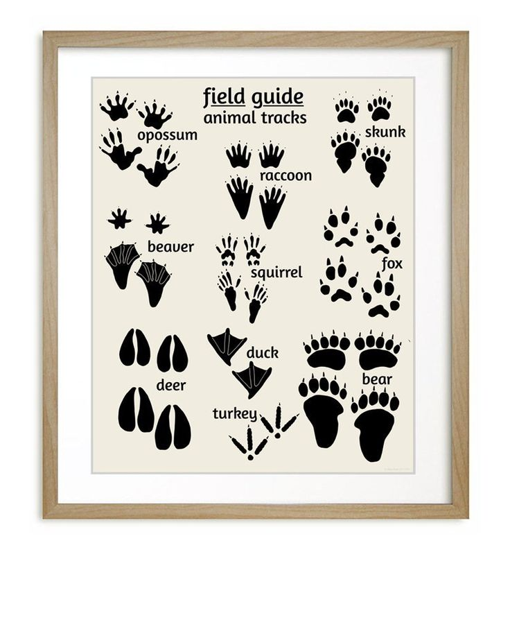 www.amazon.com Woodland-Animal-Tracks-Poster-Nursery dp B00FRRNCV0