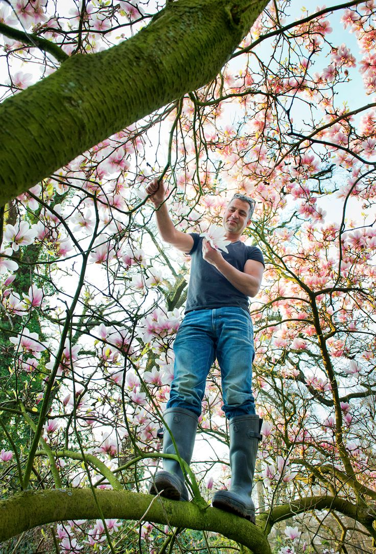 Magnolia! Hieperdepiep: het is voorjaar! Het grote wildplukseizoen is eindelijk begonnen en niets symboliseert de lente meer zoals de bloei van de vele struiken en bomen dat doet. Neem nou de magnolia: deze boom is oorspronkelijk niet van hier. Magnolia's komen voor van Amerika tot China en zijn wel al sinds honderden jaren ingeburgerd in …