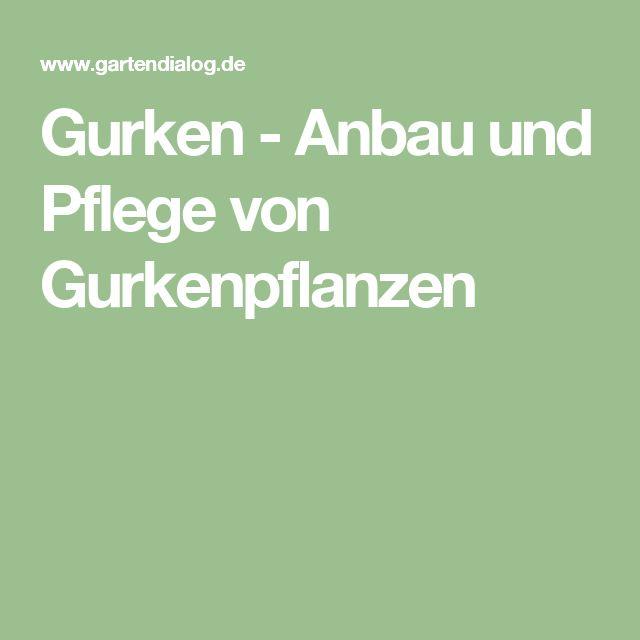 Gurken - Anbau und Pflege von Gurkenpflanzen