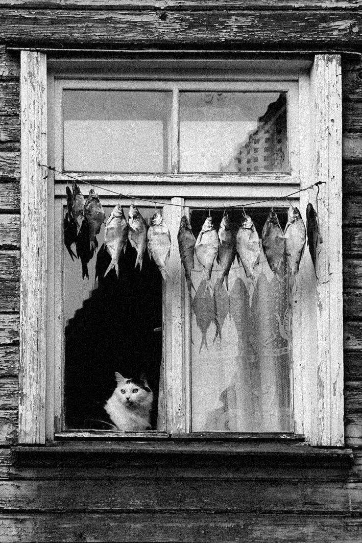 Cat keeping watch