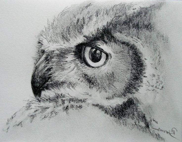 Imagens de lápis desenho da coruja kootation com wallpaper | WALLPINES.COM