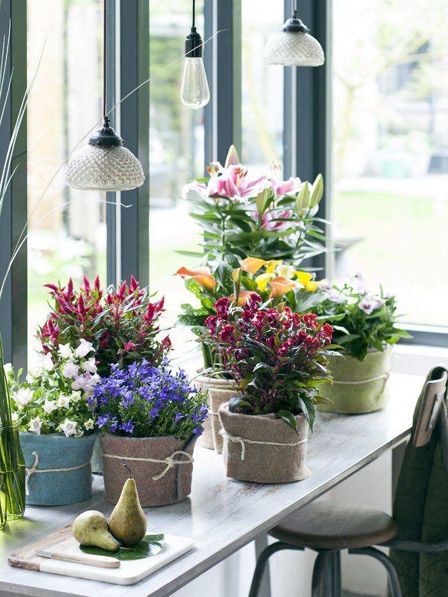 Grüne Nomaden – Pflanzenfreude.de