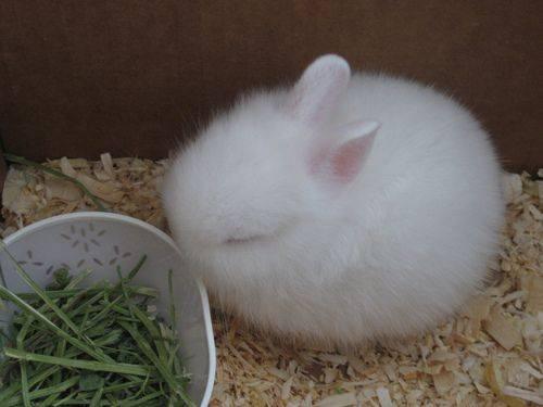 It's a fluffy bunny ball!