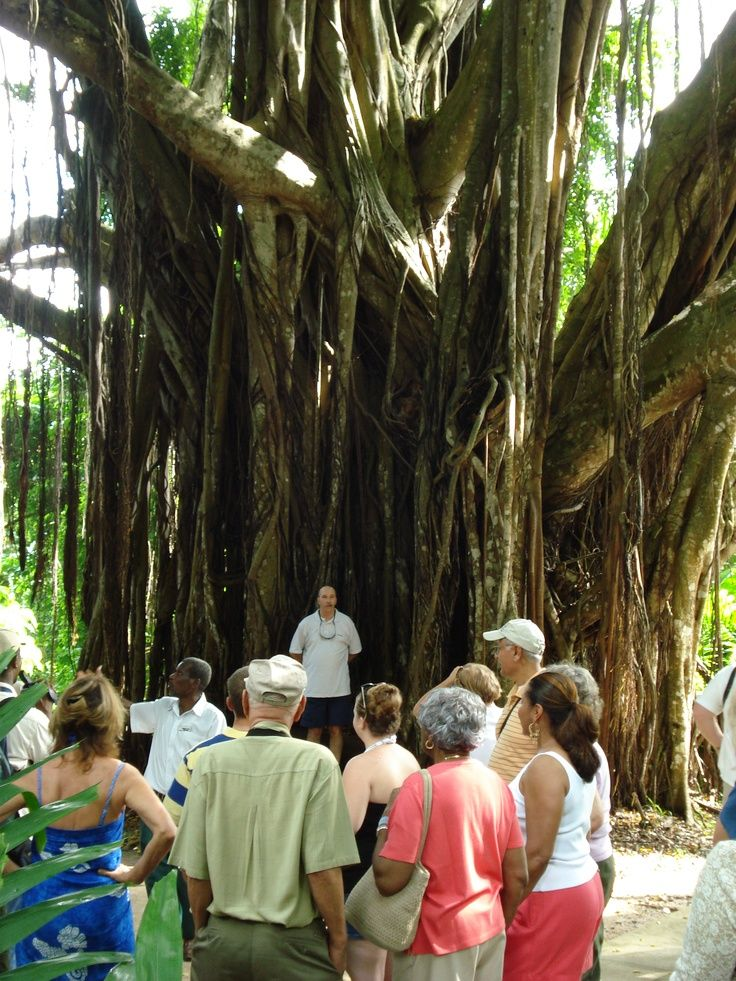 shaw gardens jamaica | Banyon Tree Shaw Gardens Ocho Rios, Jamaica