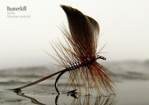 Beaverkill tied by Miroslaw Senderski (I like how this is photographed!)