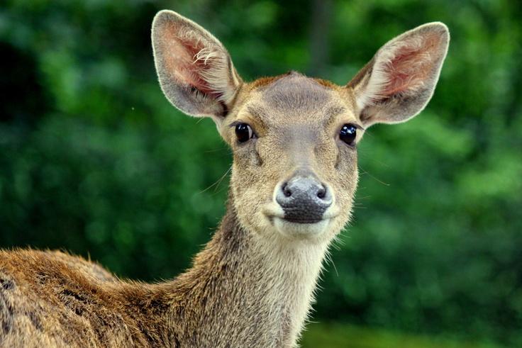#photography #animals: Photos, Photo Galleries