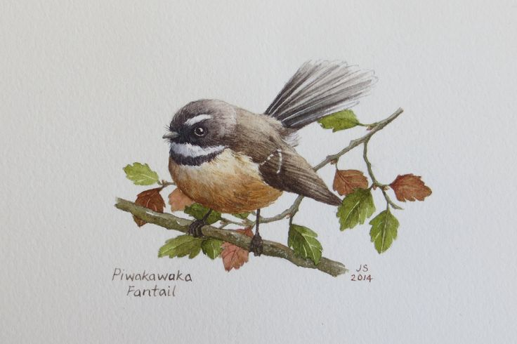 Piwakawaka - Fantail  (with red beech)  watercolour  Jane Sinclair