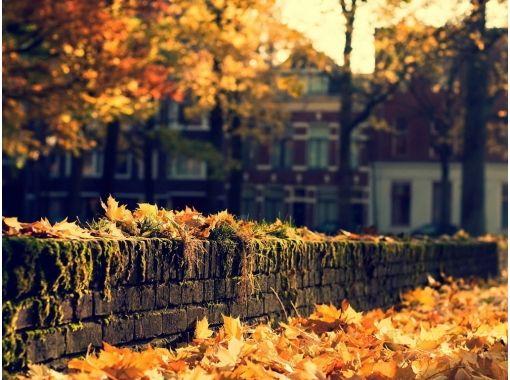 осень в городе - Поиск в Google