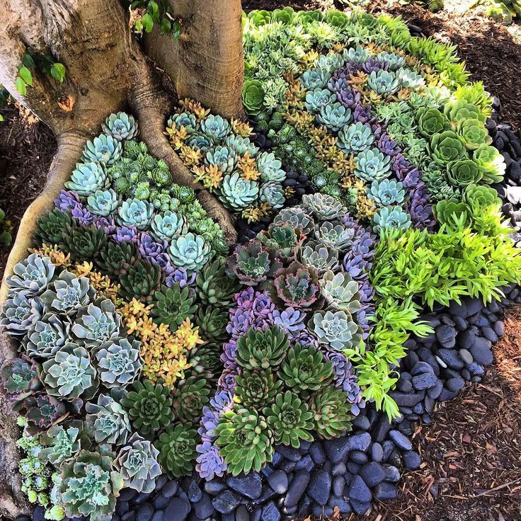My type A side cannot get over this incredible succulent landscape by @huntcollectiveltd.  I'll just be over here dreaming of gardening season... #BHGFlowers