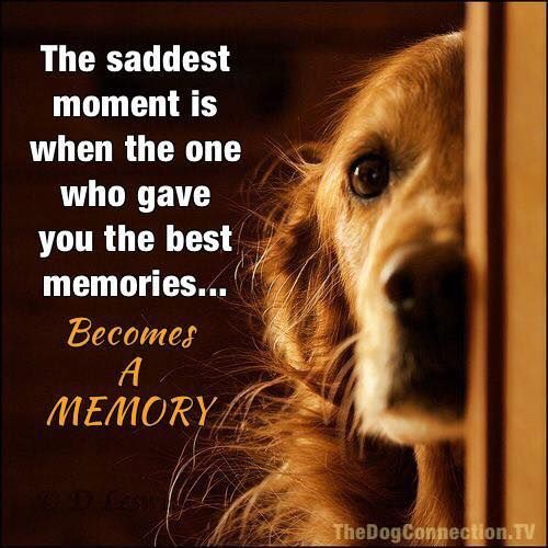 The saddest moment is when the one who gave you the best memories...Becomes A MEMORY #dogquotes