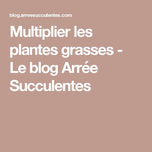 Multiplier les plantes grasses - Le blog Arrée Succulentes