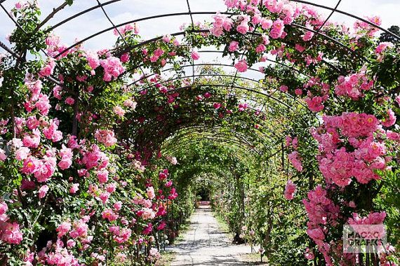 Rose Garden Tapestry, Photo Wall Hanging, Flower Path, Floral Decoration. Photo by Donatella Tandelli.  DETAILS Soft, thin and light. Easy to hang