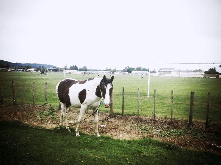 Horse cow