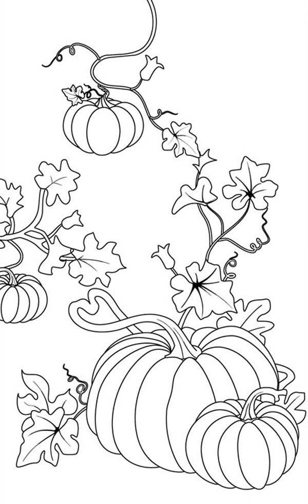 Pumpkin Vine Coloring Pages Pumpkin Coloring Pages Fall Coloring Pages Halloween Coloring Pages