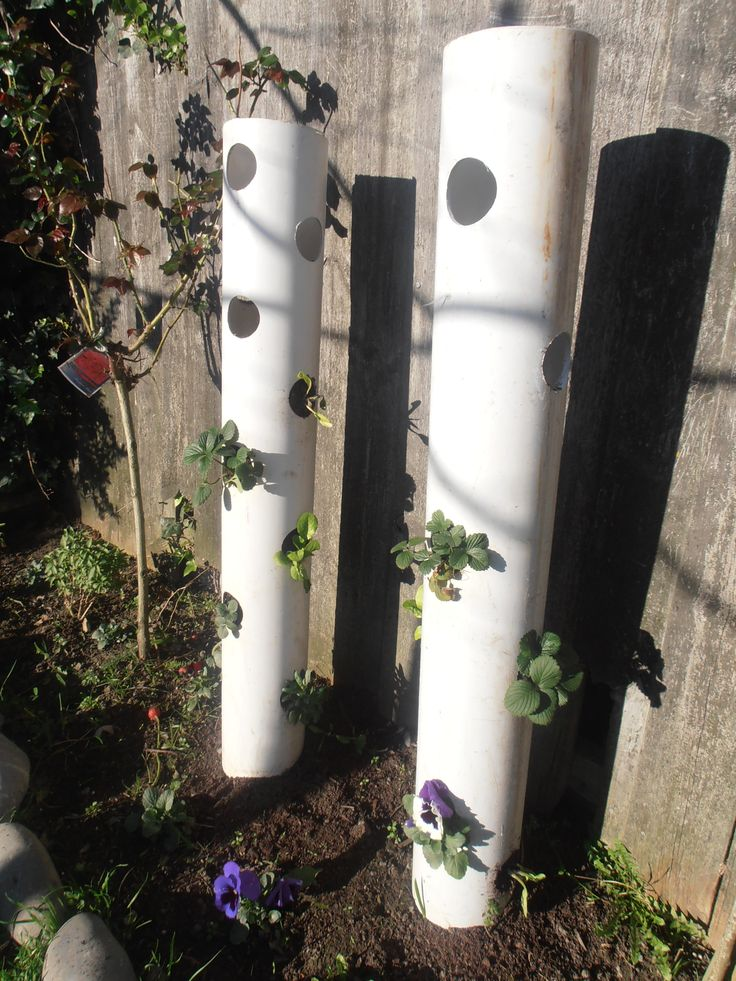 vertical gardening - DIY - experimenting with strawberries, lettuce, pansies, pak choy