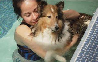 Mi dica dottore....: Pet therapy: utilità e limiti