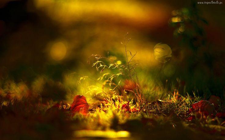 Jesień, Liście, Trawa, Rozmyte, Tło, Makro