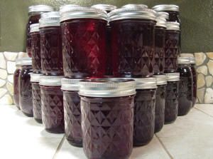 Making Prickly Pear Jelly