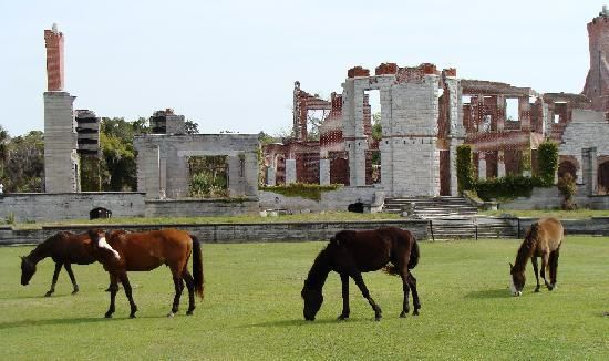 Cumberland Island National Seashore - ruins and wild horses and beaches