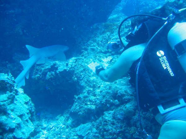 The Best Scuba diving sites and Scuba dive destinations in Central Americas for Scuba divers and snorkelers, from Costa Rica's Pacific coast to the Honduras's Bay Islands.