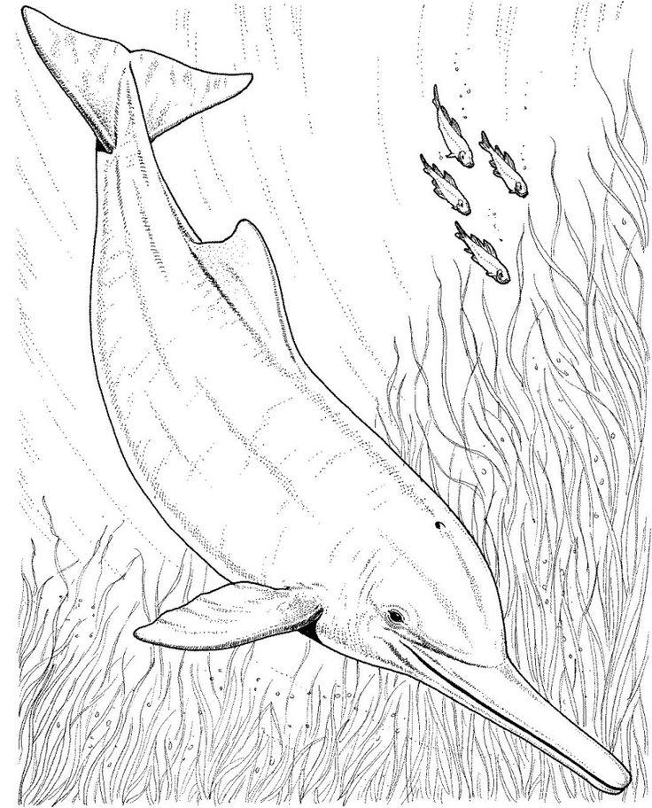 hard dolphin coloring pages - photo#17