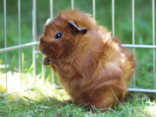 Such a cute piggy!
