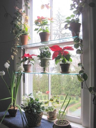 plants on glass shelves in the window