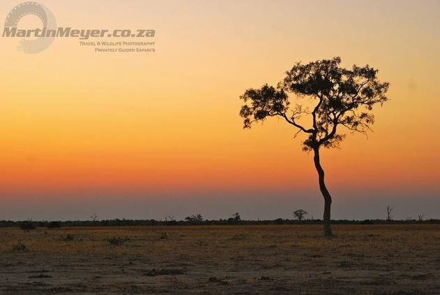 Gorgeous light over the African plains ©Martin Meyer