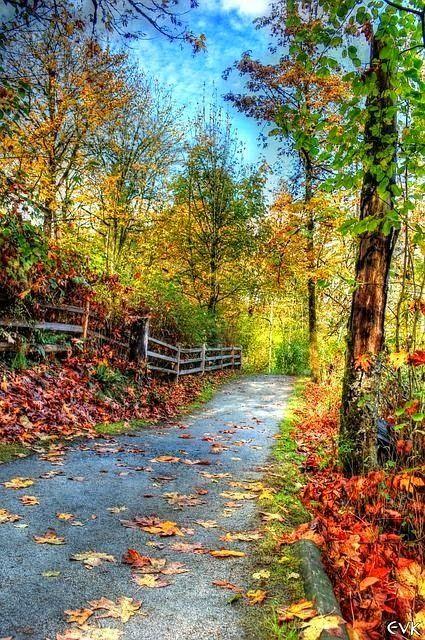 An Autumn Walk, Canada