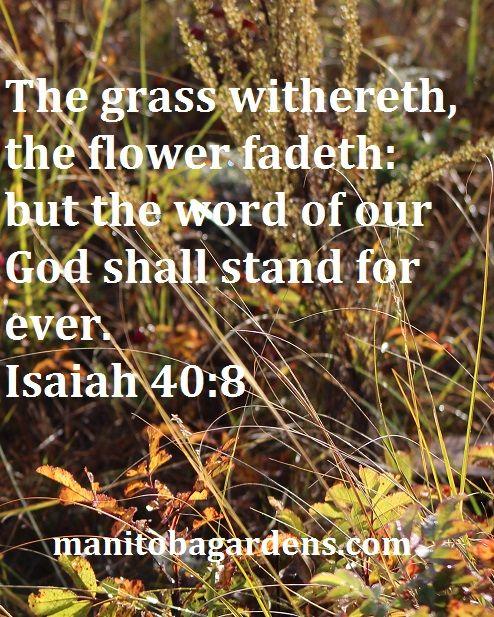 MANITOBA GARDENS: Scripture Picture Sunday # 12 - Isaiah 40:8