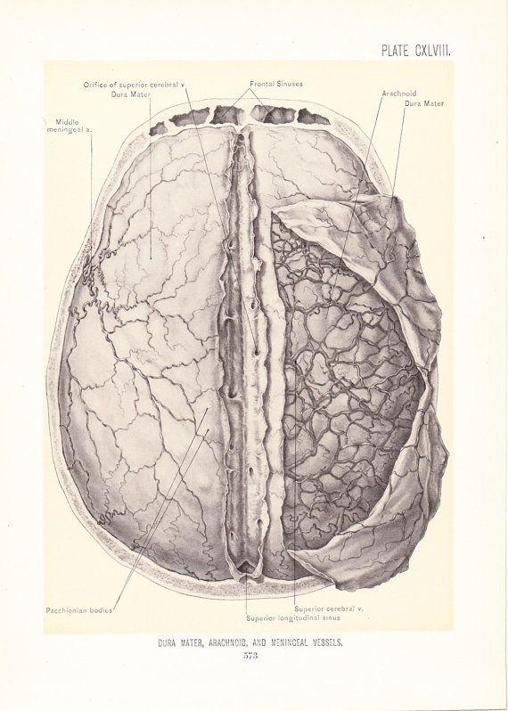 1899 Human Anatomy Print - Arachnoid Dura Mater Meninceal Vessles Brain - Vintage Antique Medical Art Illustration Doctor Hospital Office on Etsy, $20.00