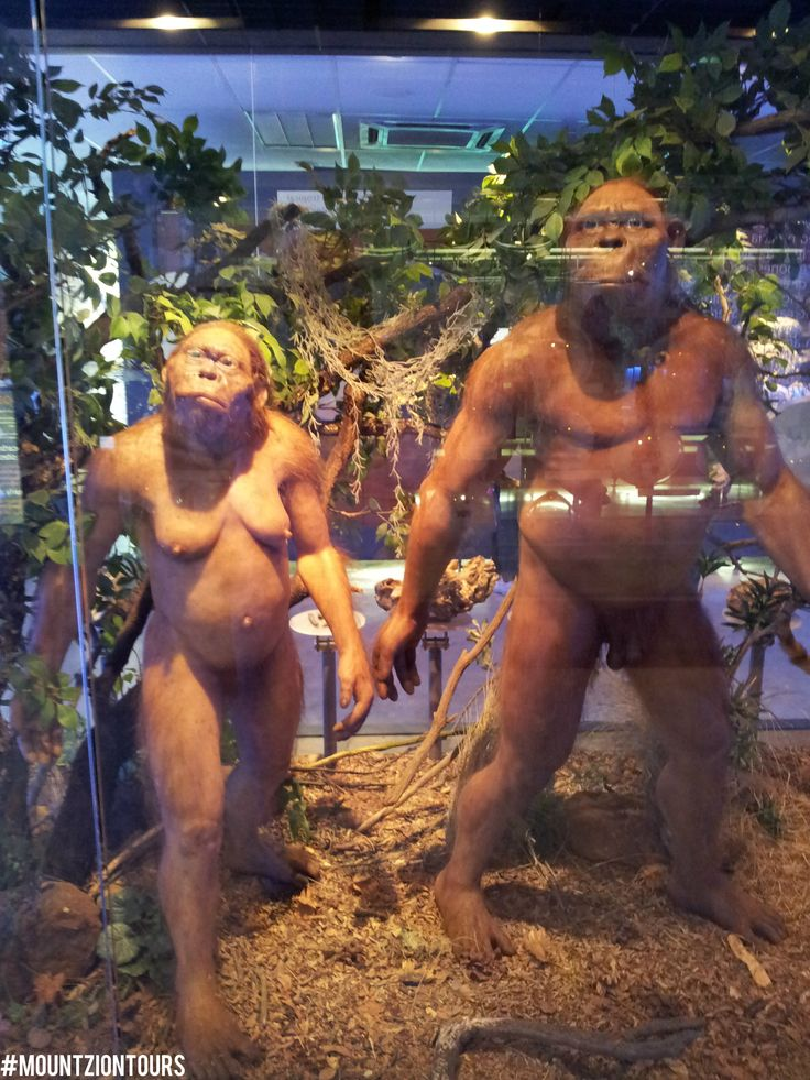 The Cradle of Humankind is one of eight World Heritage Sites in South Africa. It is the world's richest hominin site, home to around 40% of the world's human ancestor fossils.