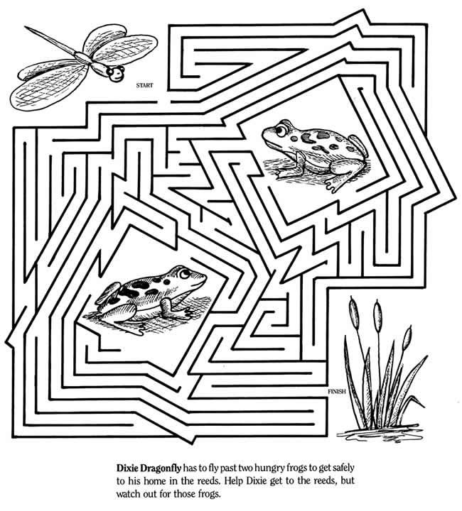 dragonfly and frog maze