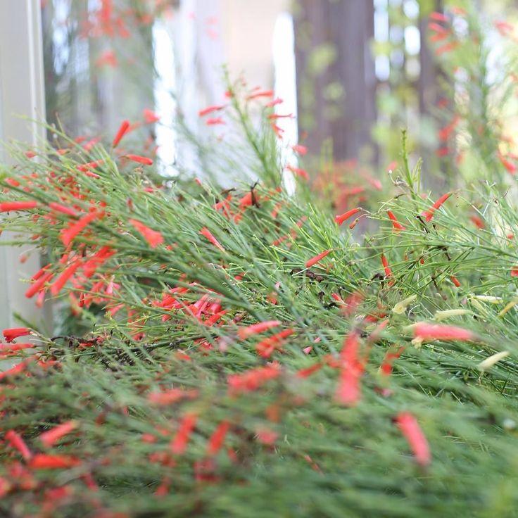 The immaculate gardens throughout Alila Seminyak make for great photo ops #bali #luxuryhotel #luxury #alilaseminyakrooml17 #roomcritic #alilatime #alilahotels #alilaseminyak