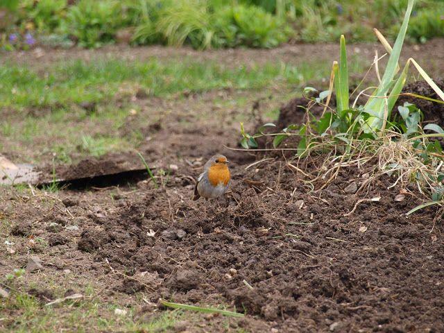 CLARISSIMUS: Nejvyšší čas rozmístit na zahradě krmítka pro drob...