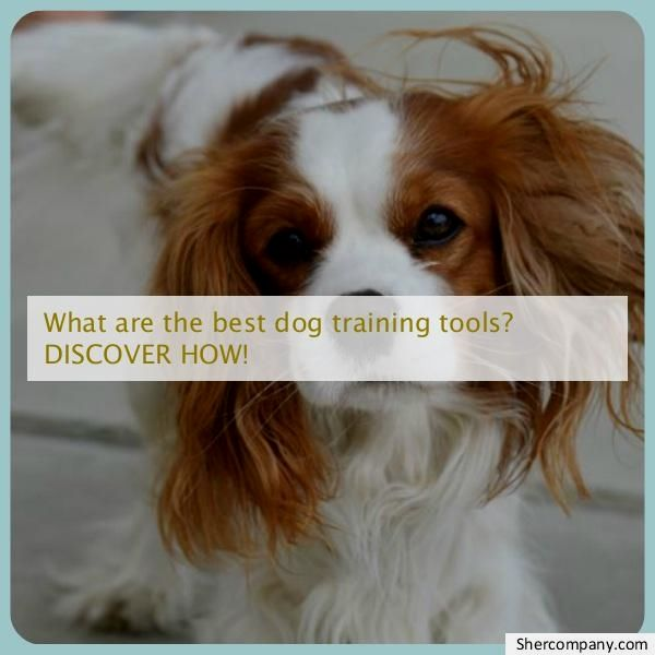 Dog Training Images Check Out The Picture For Various Dog