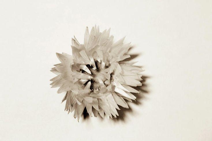 Flower  By Olga Olay Photograph - Flower by Olga Olay