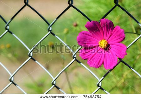 Cosmos prevails by ByBethy, via ShutterStock