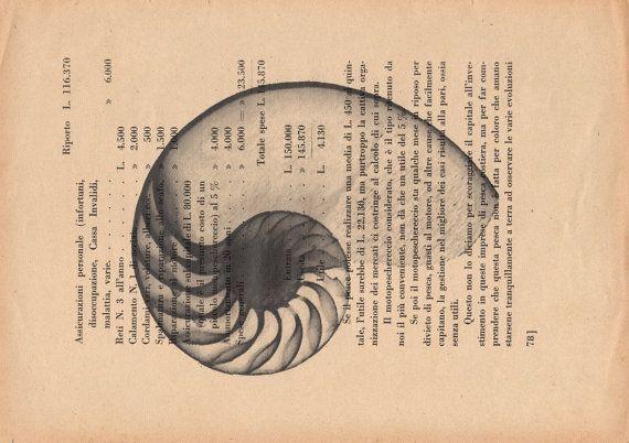 Pag.78 Nautilus stampa in scala di grigio di StonesInLove su Etsy