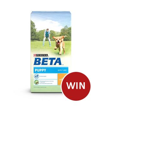 Win a 14kg bag of  Beta Puppy Dog Food
